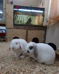 קליניקה טיפול בעזרת בעלי חיים