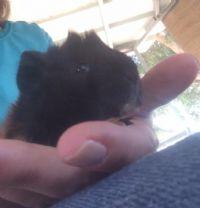 פלורי אמבון - מטפלת בעזרת בעלי חיים בילדים ונוער