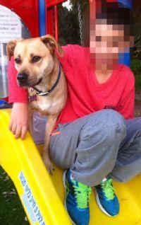טיפול בעזרת כלבים - יעל טל