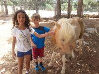 אורי גיטלין - מטפל רגשי בעזרת סוסים