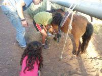 אורי גיטלין מטפל רגשי בעזרת סוסי פוני