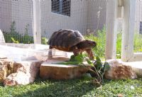 שוקי קרן - מטפל בעזרת בעלי חיים