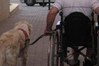 נכה על כיסא גלגלים וכלב כלבי עזר ושירות