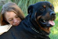 שיקום נוער במצוקה עם כלבים ילדה מחבקת כלב