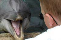 ילד מתקשר עם דולפין - טיפול בעזרת דולפינים