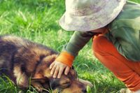 טיפול בפחד מכלבים ילדה מלטפת כלב
