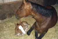 ההיבט הטיפולי והמרגש בהמלטת סיייחה סוסה וסייח