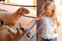 """ילדה מלטפת כבשה בטיפול בעזרת בע""""ח"""