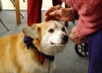 זקנה מלטפת כלב - בביקור בבית אבות