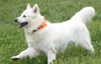 כלב - התמודדות עם פחד מחושך