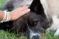 טיפול בפחד מכלבים