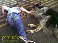 ילד משחק עם כלב טיפול בעזרת בעלי חיים