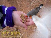 האכלת יונים טיפול בעזרת בעלי חיים