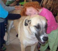 פסיכותרפיסטית בעזרת בעלי חיים ילדה מחבקת כלב