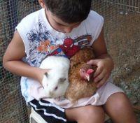 """פסיכותרפיסטית בעזרת בע""""ח ילד מחזיק תרנגולת וארנב"""