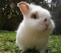 ארנב חיה טיפולית