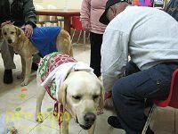 כלבים עוזרים לקשישים טיפול בעזרת בעלי חיים