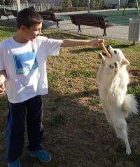כלבנות טיפולית - ילד מאלף כלב