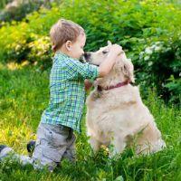 קורס כלבנות טיפולית - תל מונד