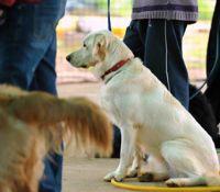 טיפול בעזרת רכיבה על סוסים וכלבנות טיפולית בילדים
