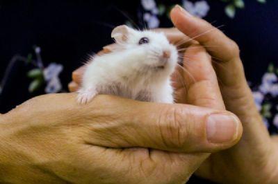 רחלי היימן, מטפלת רגשית בעזרת בעלי חיים