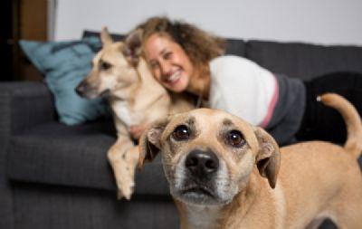 יעל טל - מטפלת רגשית בעזרת בעלי חיים