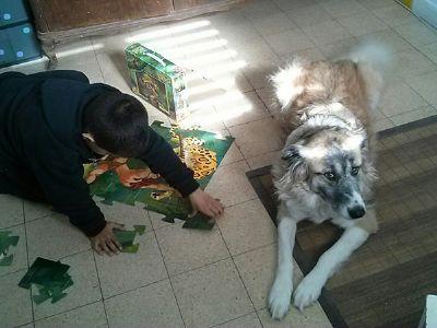 לירון קורונה - מטפלת בעזרת בעלי חיים