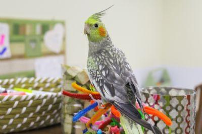 רחלי היימן, מטפלת רגשית בעזרת בעלי חיים, תוכי