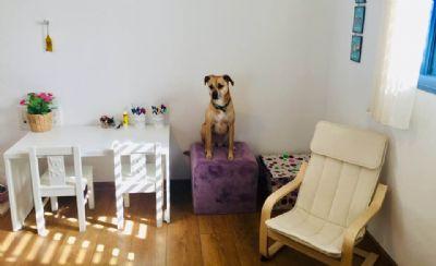 יעל טל, טיפול בעזרת כלבים קליניקה