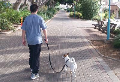 טיפול בעזרת כלב טיפולי