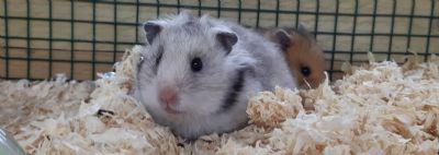 רחלי היימן מטפלת רגשית בעזרת בעלי חיים
