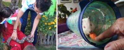 האכלת אוגר וילדים מלטפים נחש חיות טיפוליות
