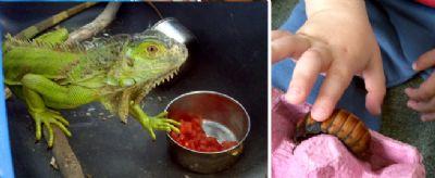 איגואנה וילדה מללטפת תיקן חיות טיפוליות
