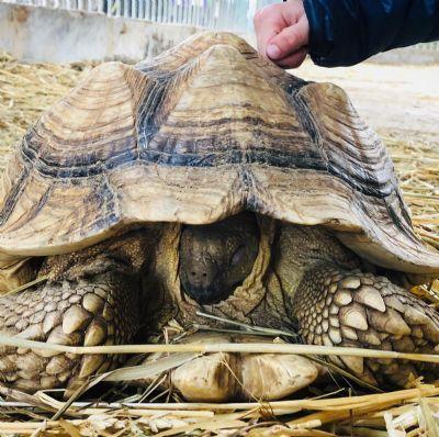 בולבי - לימודים טיפול בעזרת בעלי חיים