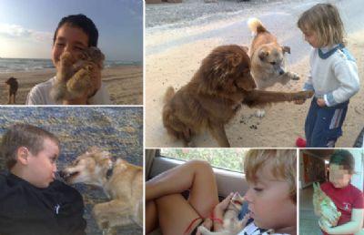 תרפיה בעזרת בעלי חיים ילדים משחקים עם כלבים