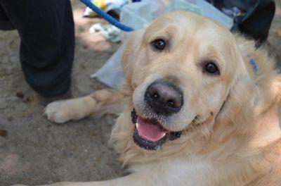 הילה שקד מטפלת רגשית הנעזרת בבעלי חיים