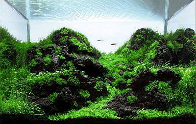 אקווריום מתוקים מסוג צמחיה, אקווריום מים מתוקים