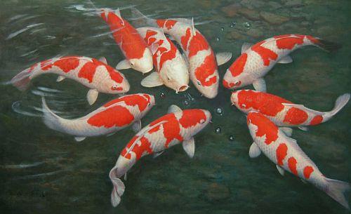 בחורף מאכילים רק פעם בשבוע את הדגים