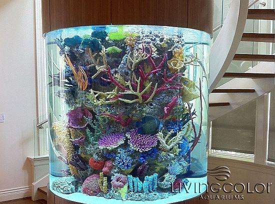 מרינה עם אלמוגים מלאכותיים של color living