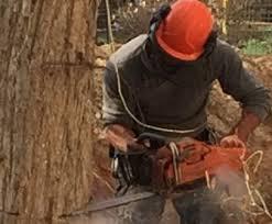 כריתת עצים בסביון