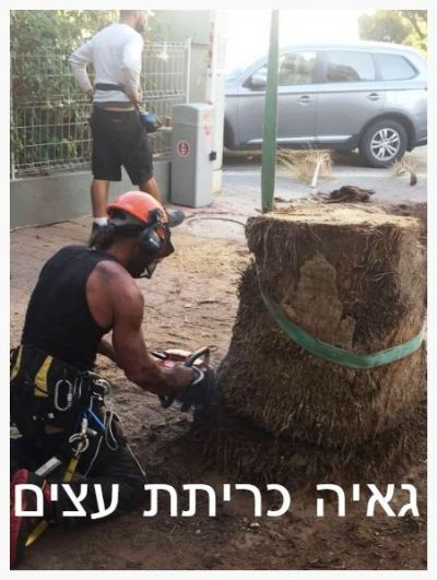 כריתת עצים בפתח תיקווה