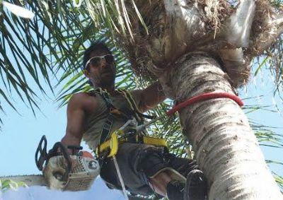 כריתת עצים בגבעתיים