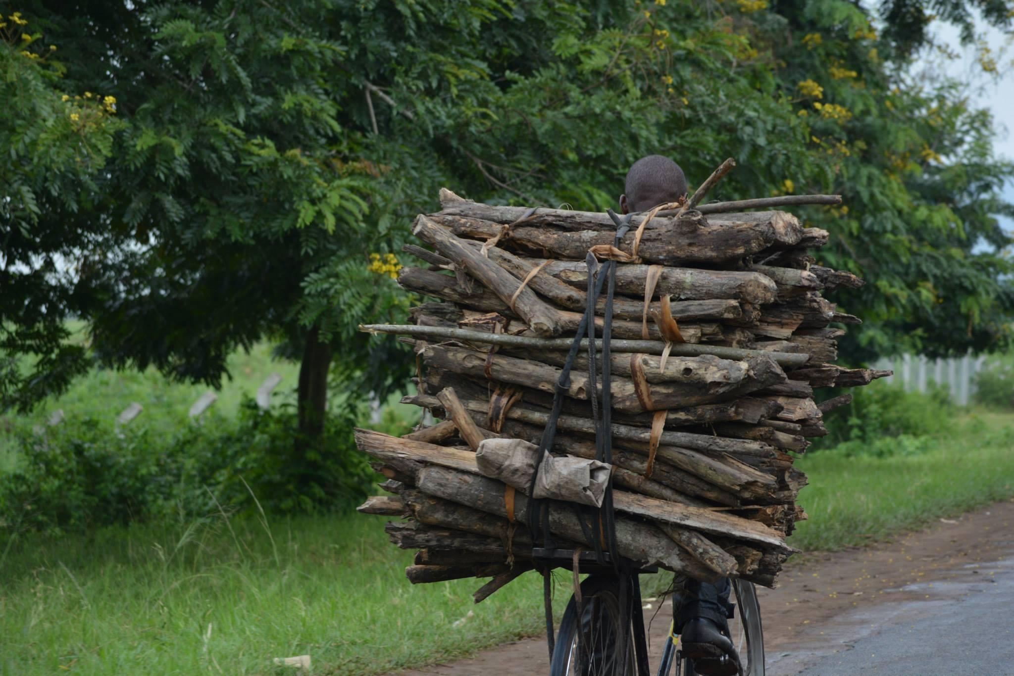 עצים על האופניים