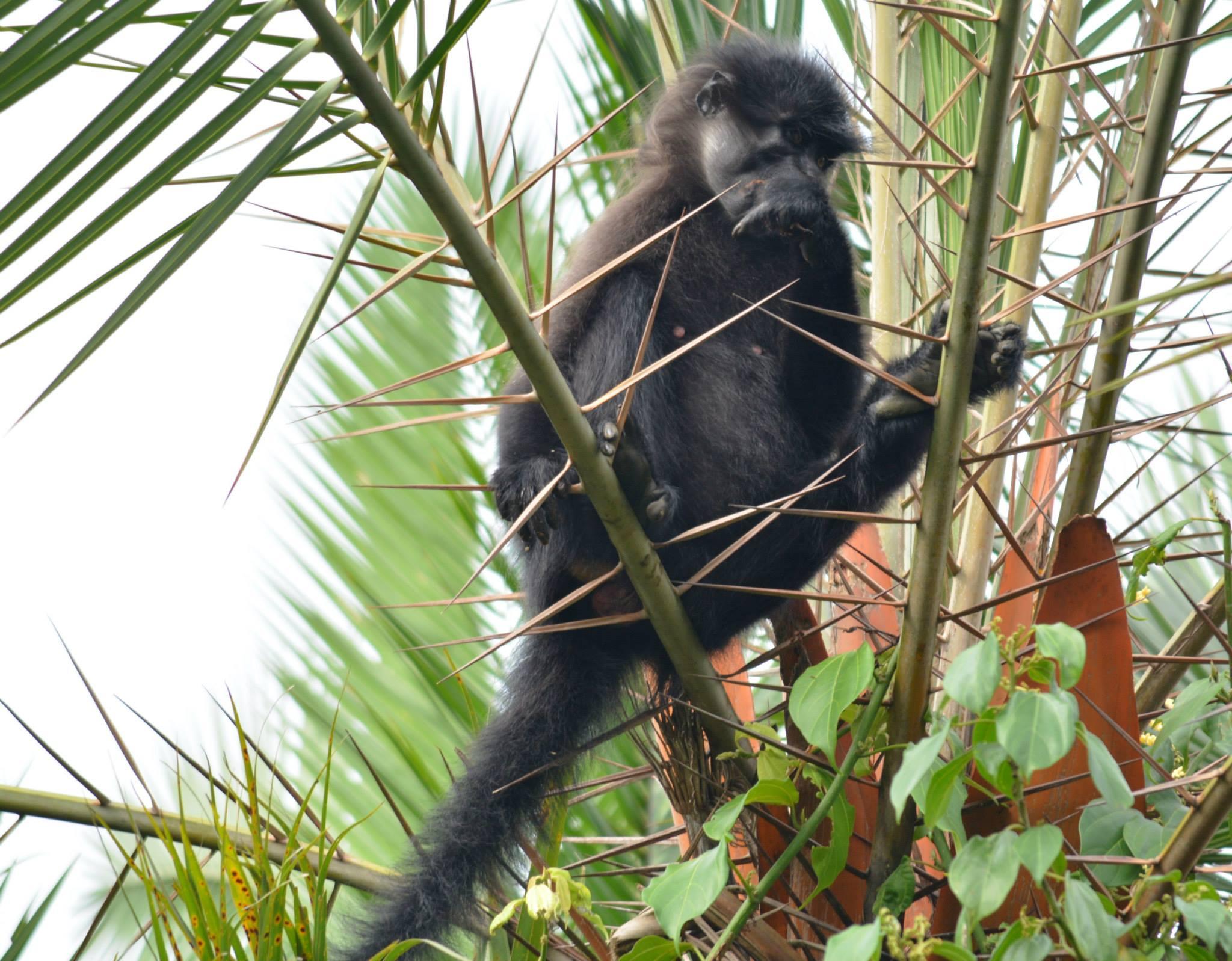 קופים בצמרות