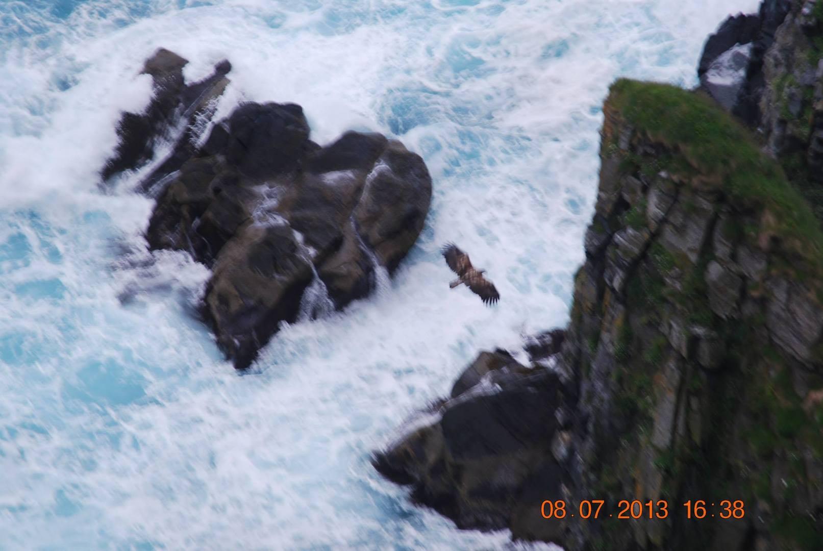 ציפורי האי-עייט ימי