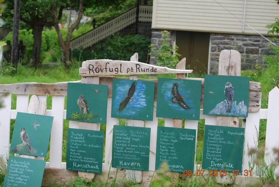 מגדיר ציפורי האי