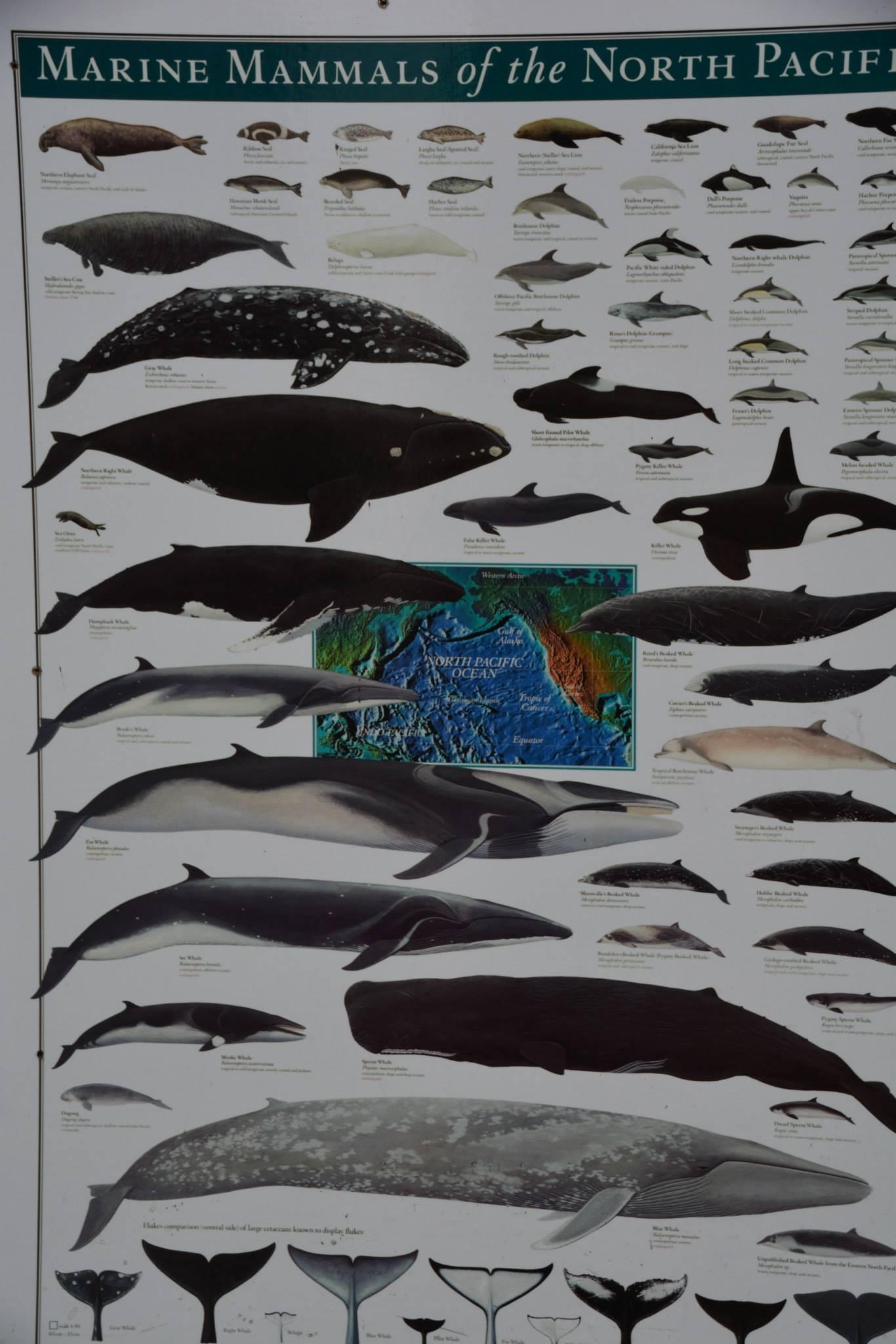 כל סוגי הלוויתנים-ברושור