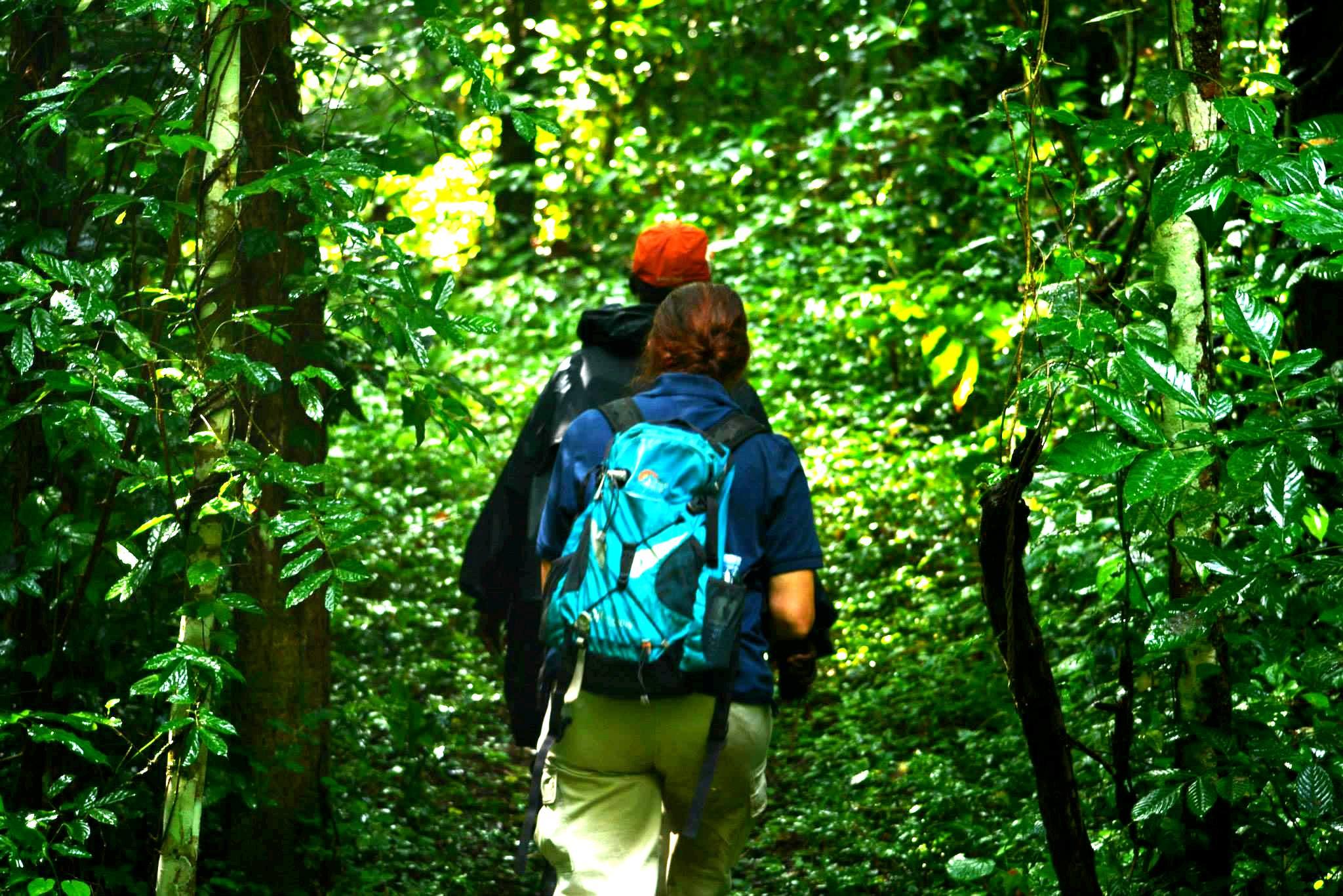 מסע חיפוש ברחבי הג'ונגל אחרי השימפנזים