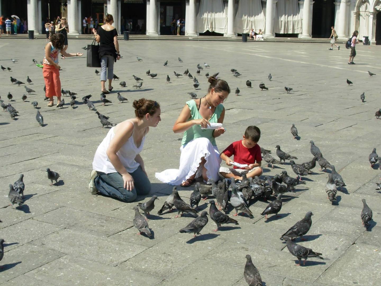 מאכילים יונים בכיכר סאן מרקו בונציה