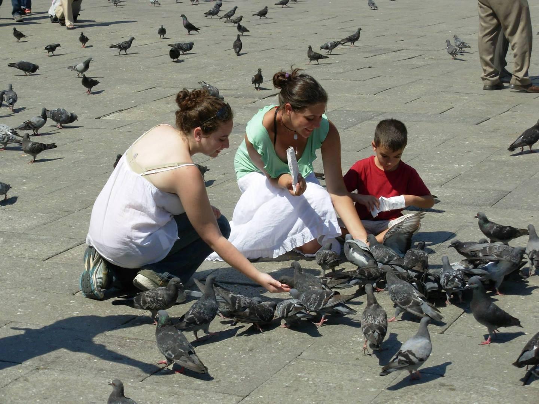 מאכילים יונים בכיכר סאו מרקו